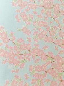 空に桜満開下S.jpg
