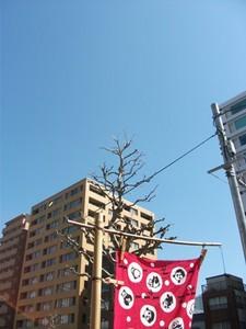 2011-03-18.JPG
