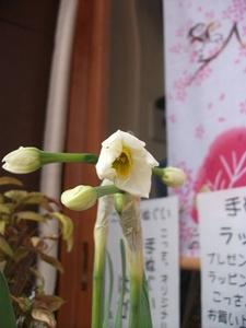 2011_0106シスちゃん.JPG