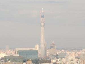 2011_0111タワーからツリー2.JPG