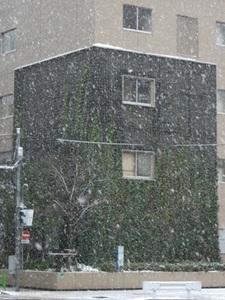 2012_0229大雪.JPG