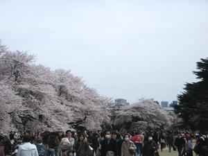 2013_03新宿御苑1.JPG
