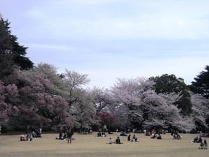 2013_03新宿御苑2.JPG