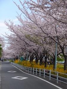 2014_0405隅田川桜.JPG