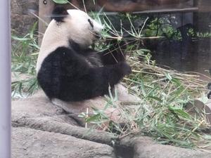 2014_0826上野動物園1.JPG