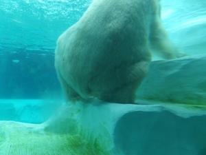 2014_0826上野動物園6.jpg