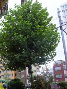 2014_0828散髪前.JPG