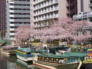 2015_0330桜.jpg
