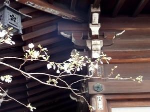 2016_0322櫻木神社.JPG