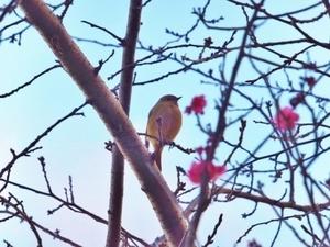 2017_0112小鳥S.jpg
