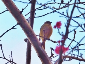 2017_0112小鳥UP.jpg