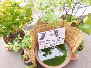 2017_0815庭.JPG