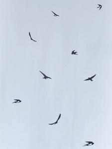 ツバメ飛んでいる上S.jpg