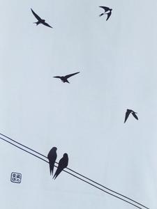 ツバメ飛んでいる下S.jpg