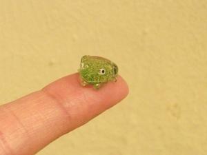 指乗りカエル.JPG